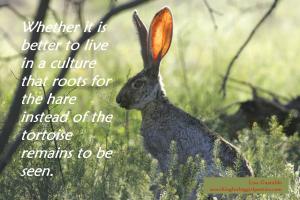 Hare vs. Tortoise